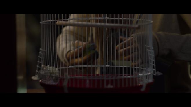 BirdBox - 1BirdBox.png